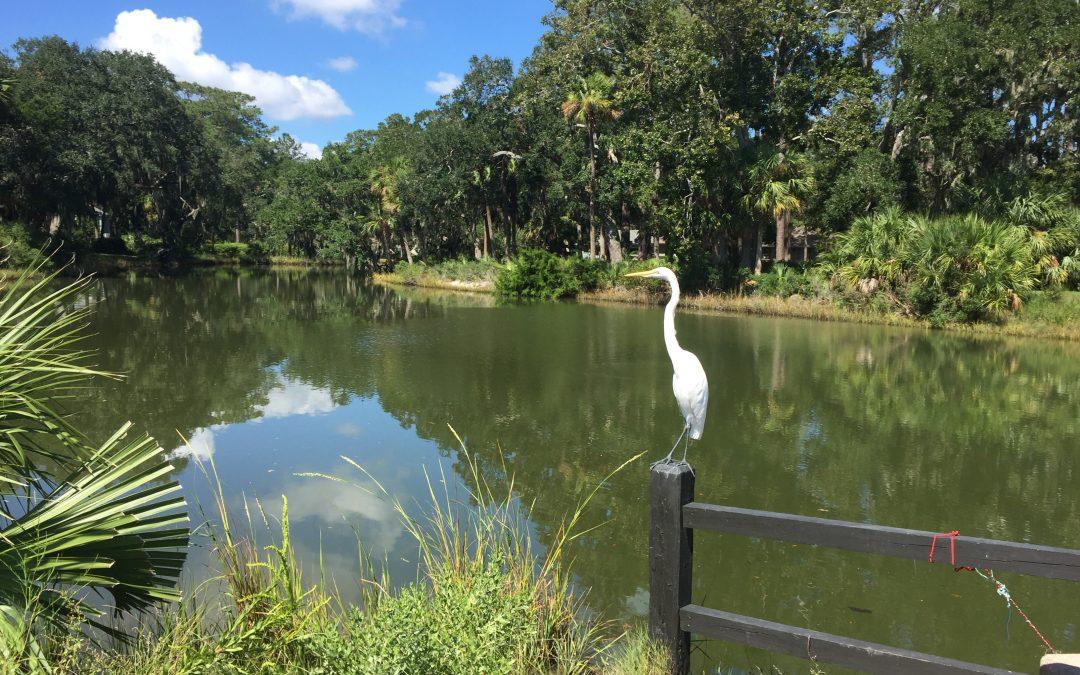 Egret sitting on a fence post near a lagoon