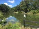 Egret sitting on a fence post near a lagoon